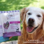 Dog Treats I and Love and You