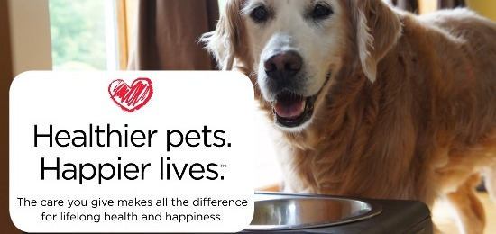 3 Ways To Choose The Best Food For Your Pet #GetHealthyHappy