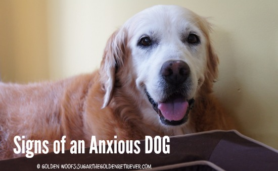 Signs of an Anxious Dog