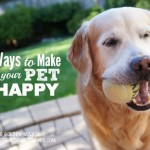 Ways Make Happy Pets #GetHealthyHappy
