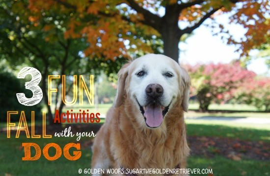 3 FUN Fall Activities With Your Dog