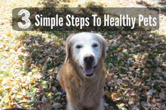 3 Simple Steps to Healthy Pets