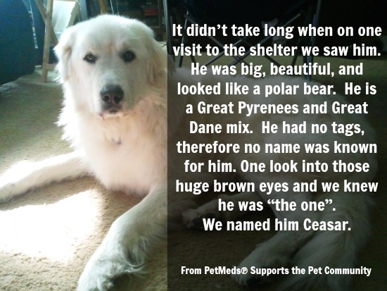 Ceasar 1-800PetMeds Rescue Story