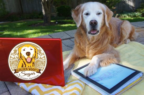 Blog Anniversary Golden Woofs: Sugar The Golden Retriever