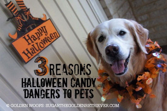 Halloween Candy and Dogs