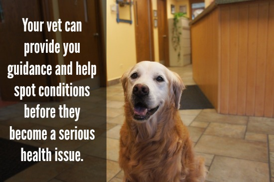Healthy Pets: Annual Vet Visit #GetHealthyHappy