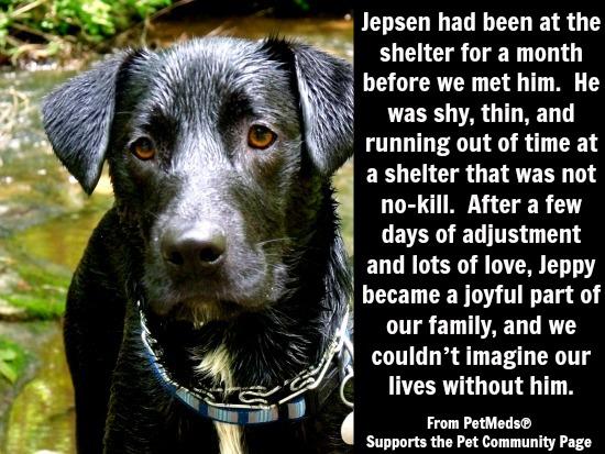 Jepsen 1-800-PetMeds Rescue Story
