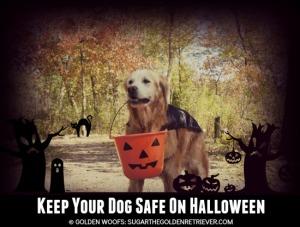Keep Your Dog Safe on Halloween