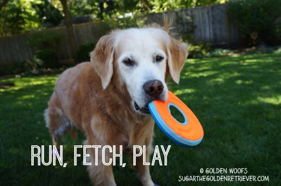 PLAY 3 FUN Fall Activities With Your Dog