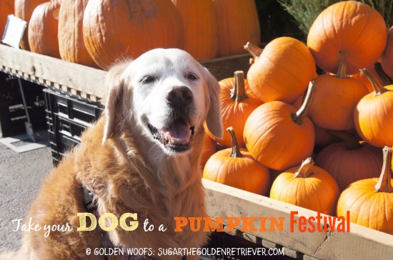 PUMPKIN Fest 3 FUN Fall Activities With Your Dog