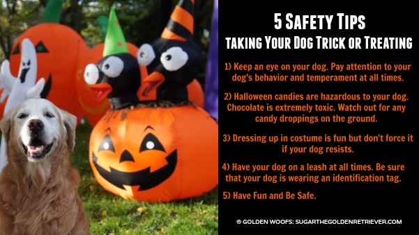 Pet Safety Tips: Trick or Treating