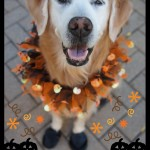 Happy Halloween Golden Retriever