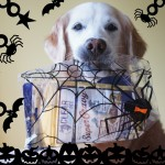 Sugar Clear Conscience Pet Halloween Treats
