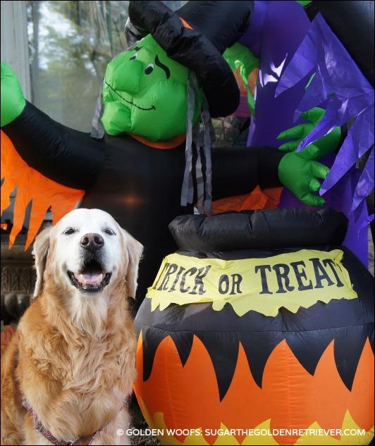 Trick or TREAT Golden Retriever Dog