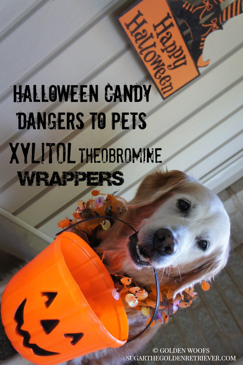 Dangers To Pets: Halloween Candy