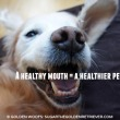Dental Health: Healthy Mouth Healthy Pet