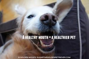 Dental Health: Healthy Mouth Healthy Pet