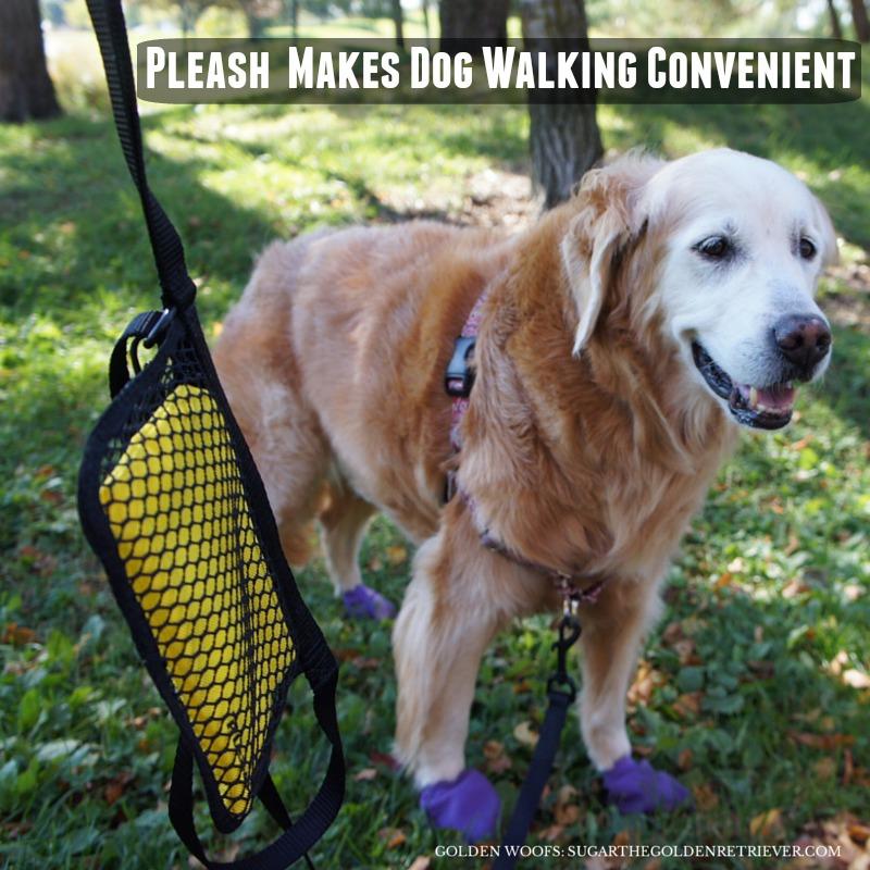 Dog Walking w/ Pleash Leash