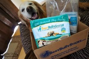 Dog Chews: Best Bully Sticks