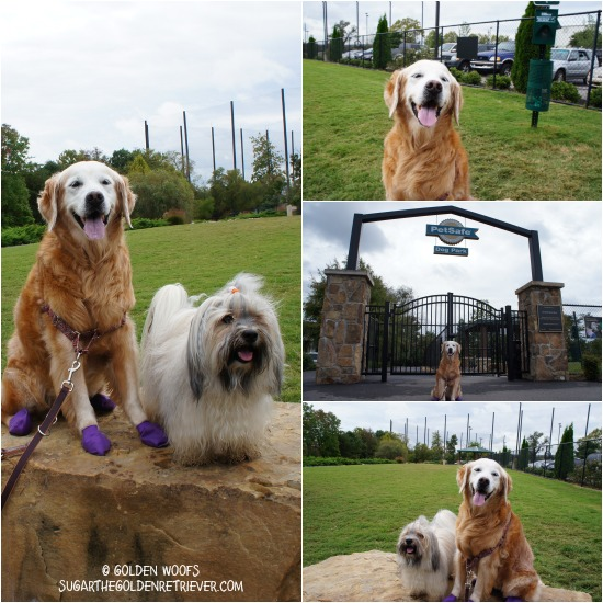 Dog Park PetSafe Blogger Summit