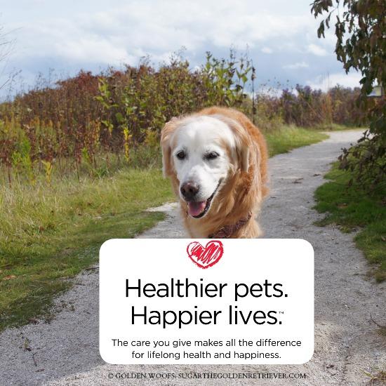 Healthy Pets #GetHealthyHappy
