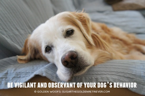 Be Vigilant Pet Parents