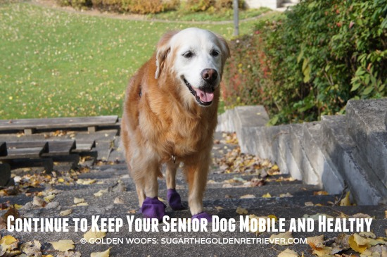SeniorDog Mobile&Healthy WellyTails Supplements