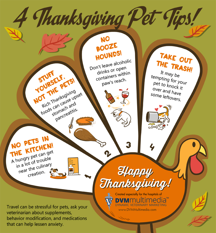 Stay Safe When Traveling Turkey: 4 Thanksgiving Pet Tips