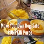 Dog Safe Pumpkin Puree
