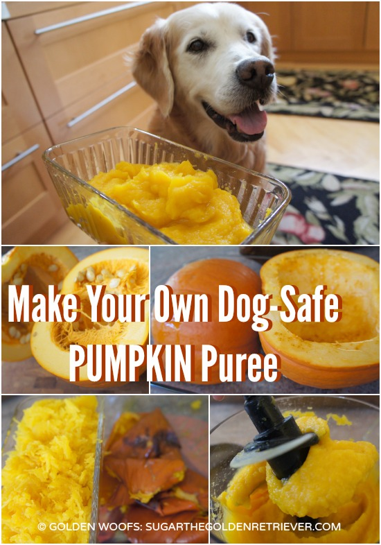Dog Safe Pumpkin Puree