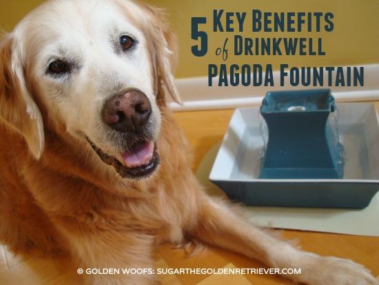 5 Benefits: Drinkwell Pagoda Fountain