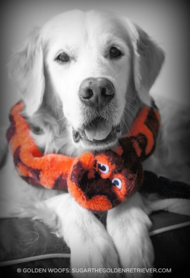 Join #Woofs2BeSnakeCharmers