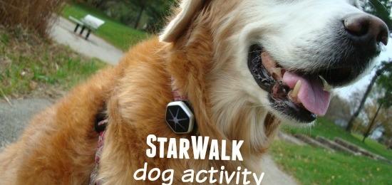 StarWalk: Dog Activity Monitor