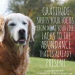 Gratitude Quote: Present Moment
