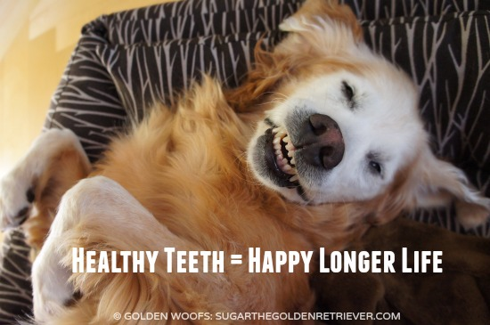 Healthy Teeth Happy Longer Life