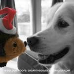 Nose to Nose Santa Hedgehog Dog Toy