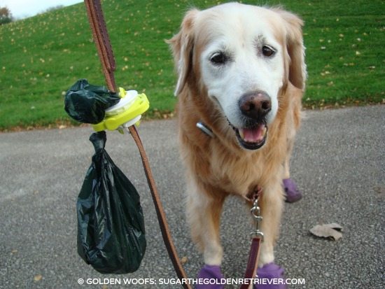 Let Fifth Paw Carry Your Dog's Poop Bag