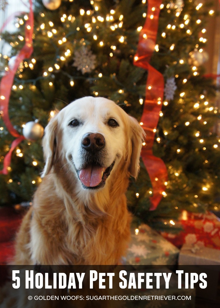 5 Holiday Pet Safety Tips