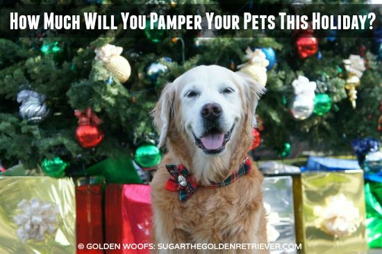 Pet Pampering This Holiday