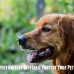 Petplan: Protect Your Pet's Health