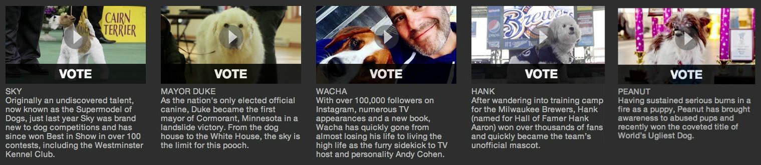 World Dog Awards: Dog of the Year