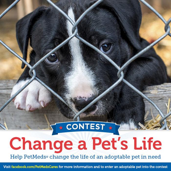 1800PetMeds Change A Pet's Life Contest