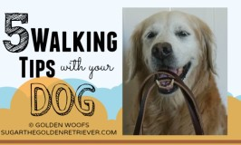 5 Walking Tips With Your Dog