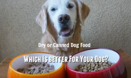 Dry or Canned Dog Food