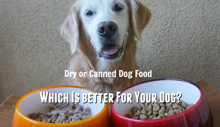 Dry or Canned Dog Food: Which Is better For Your Dog? #HolisticSelect