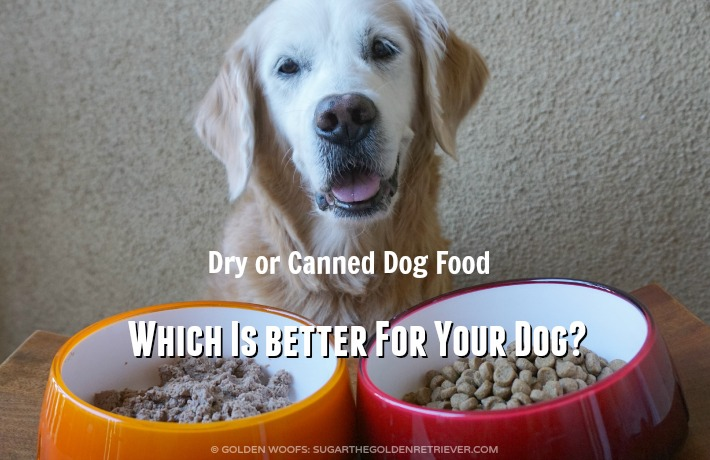 Is Dry Food Better Than Canned For Dogs