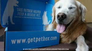 PetBox Helps Feed Rescue Pets