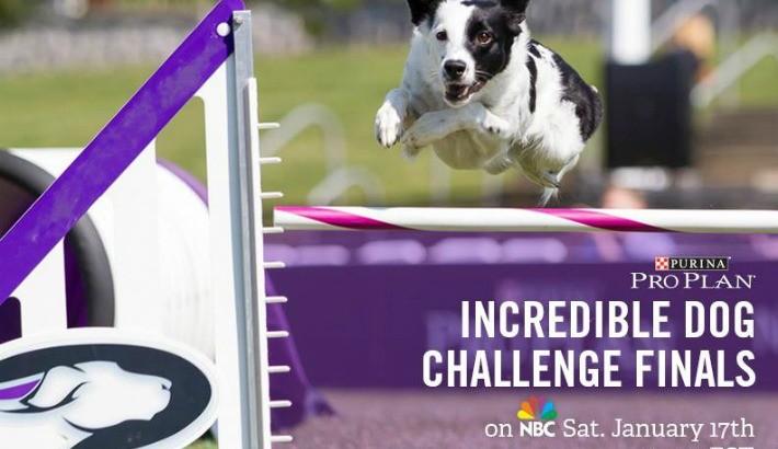 Purina Pro Plan Incredible Dog Challenge