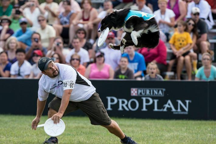 Purina Pro Plan Incredible Dog Challenge_Freestyle Flying Disc