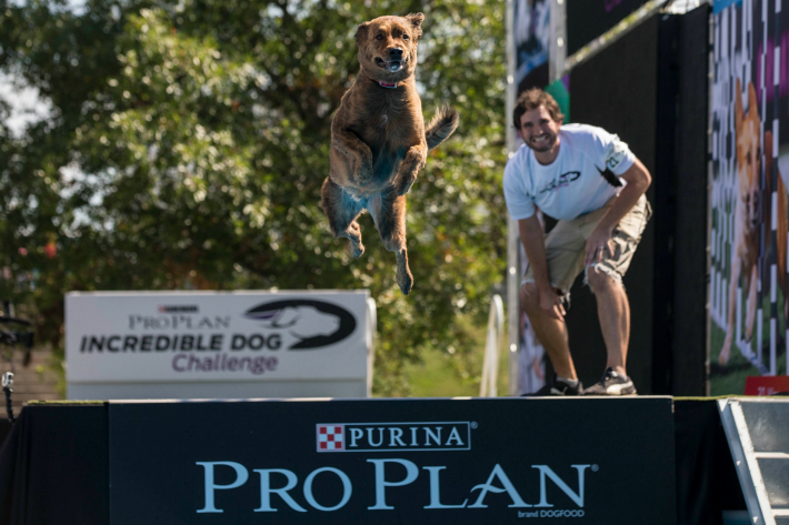 Purina ProPlan Incredible Dog Challenge Diving